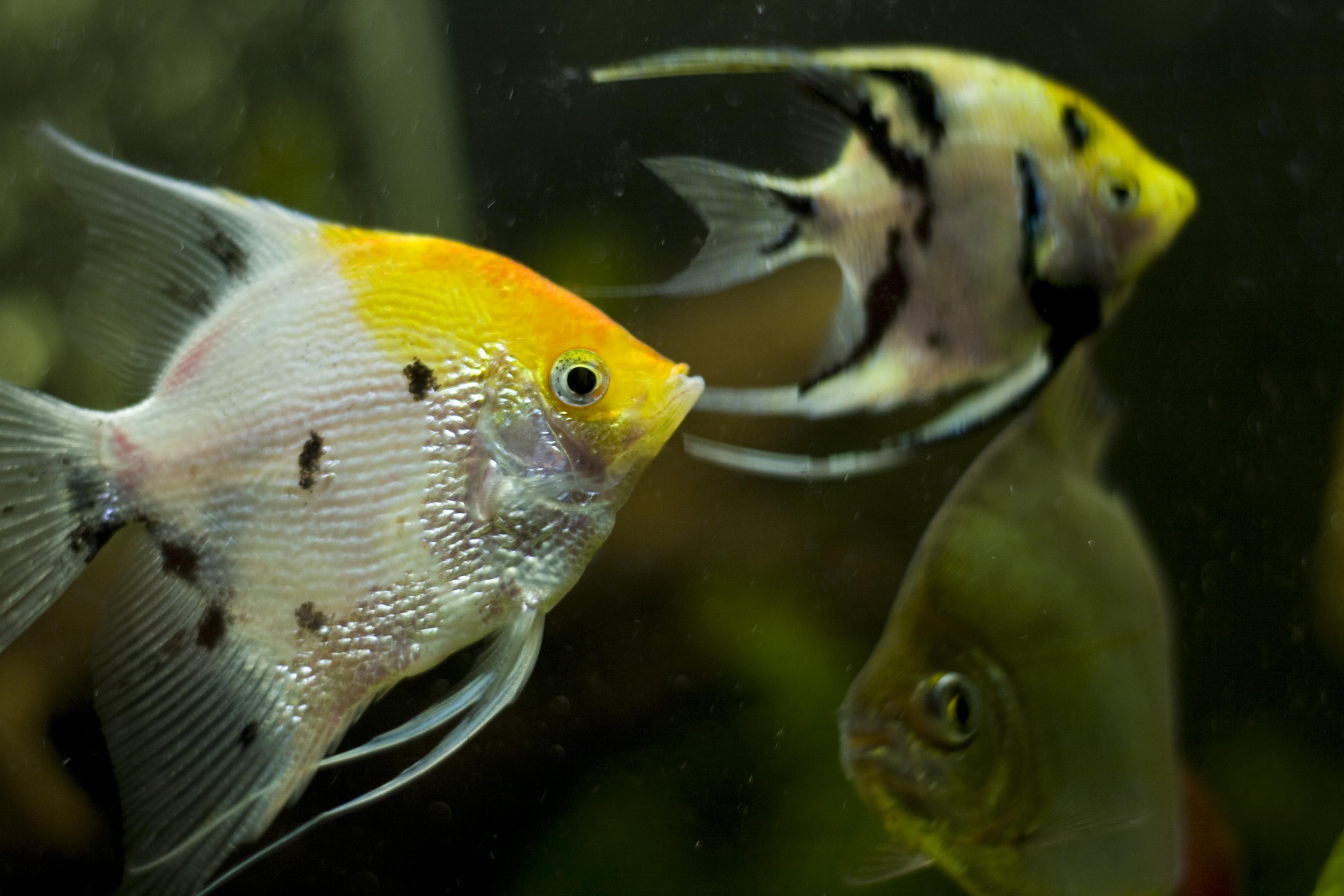 Image Result For Fish Aquarium Near