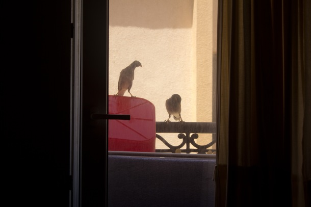 meanbirds
